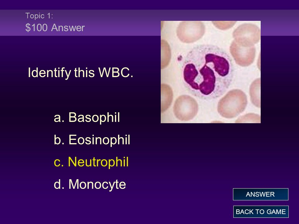 Identify this WBC. a. Basophil b. Eosinophil c. Neutrophil d. Monocyte