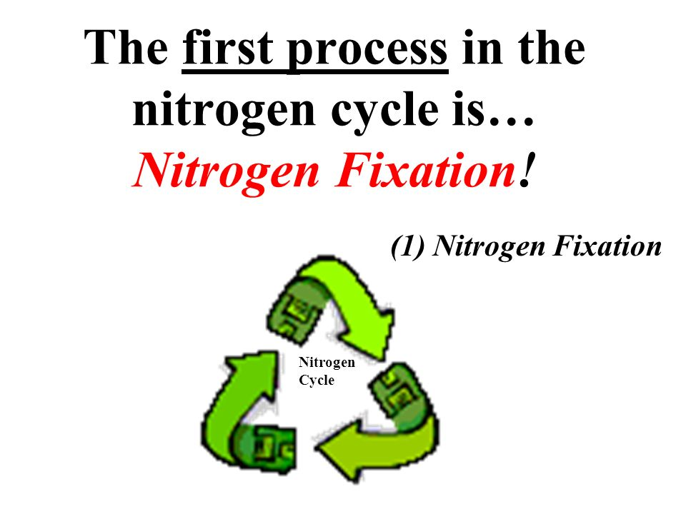 The first process in the nitrogen cycle is… Nitrogen Fixation!