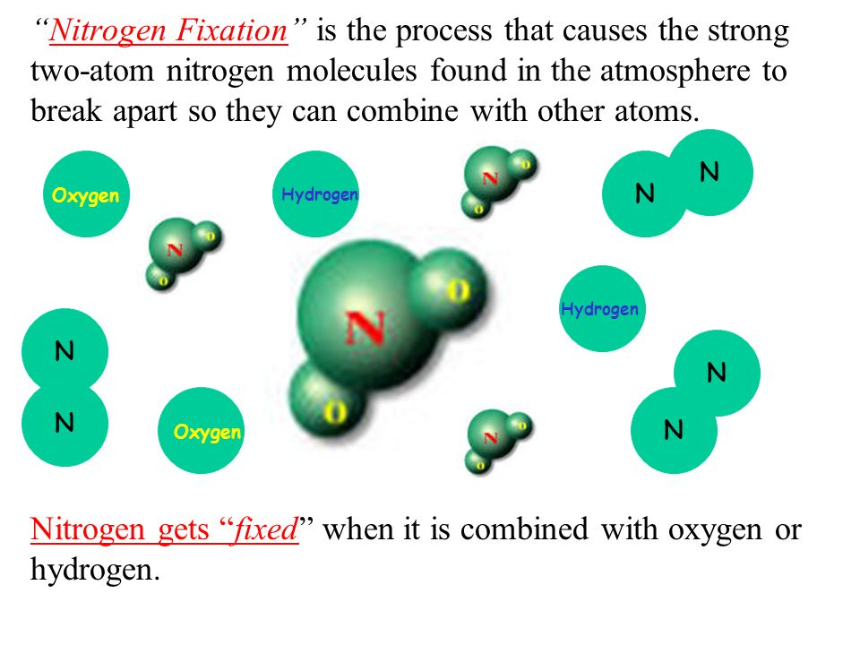 Nitrogen Fixation is the process that causes the strong two-atom nitrogen molecules found in the atmosphere to break apart so they can combine with other atoms. Nitrogen gets fixed when it is combined with oxygen or hydrogen.