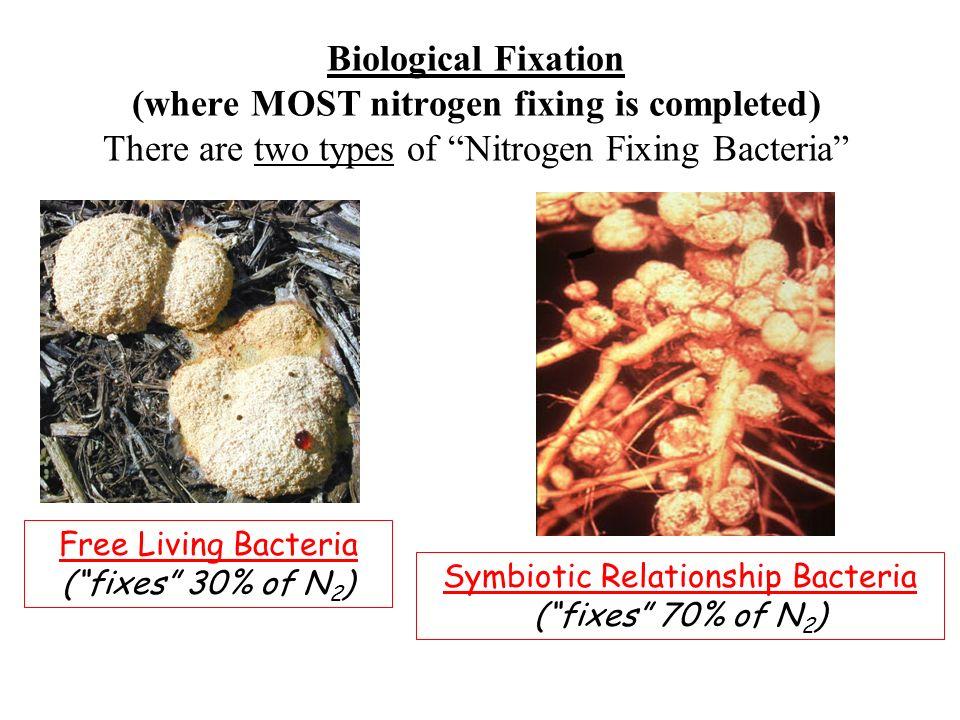Symbiotic Relationship Bacteria