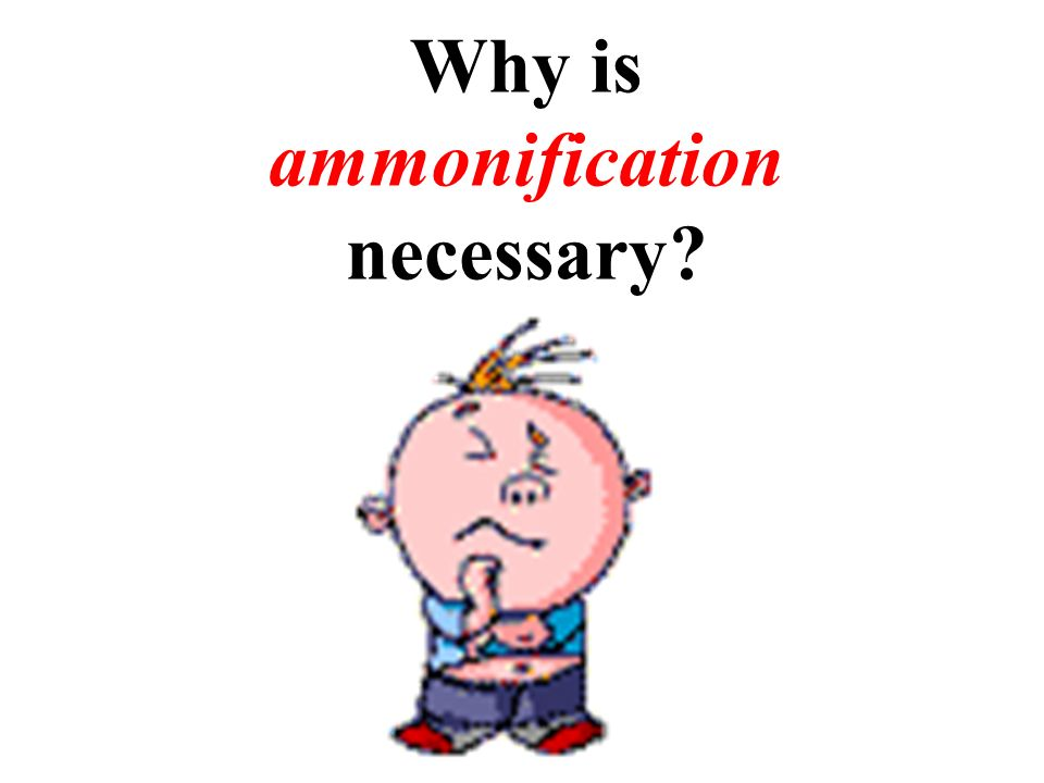 Why is ammonification necessary