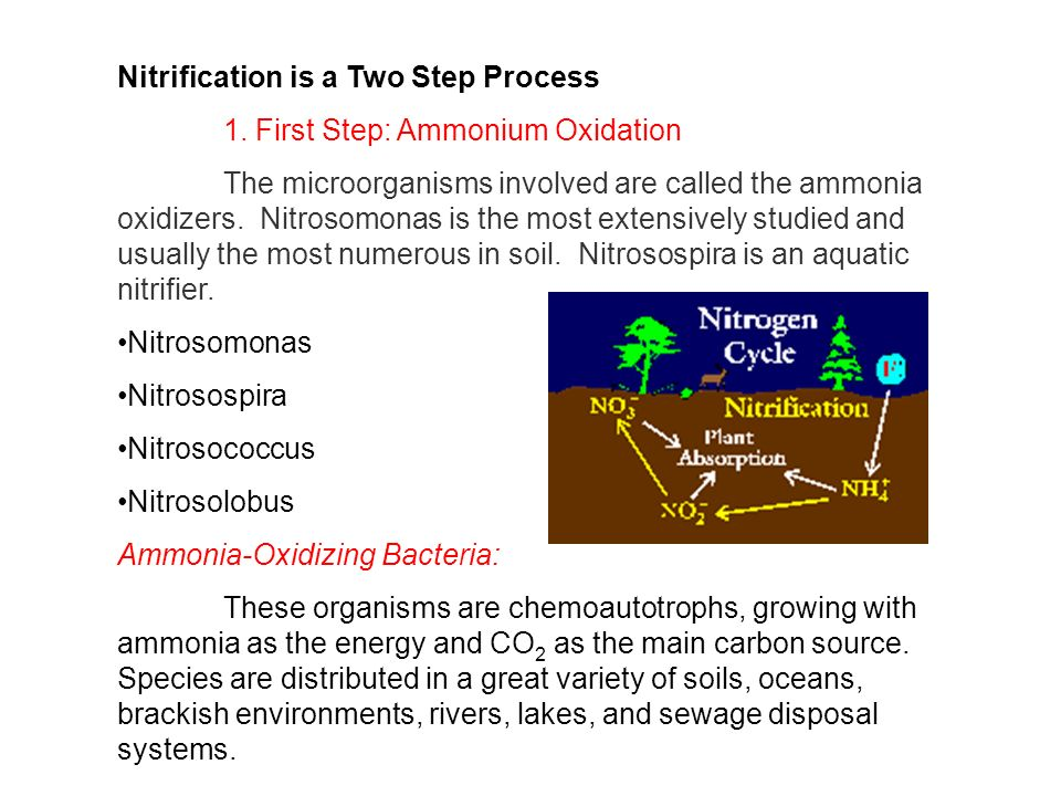 Nitrification is a Two Step Process