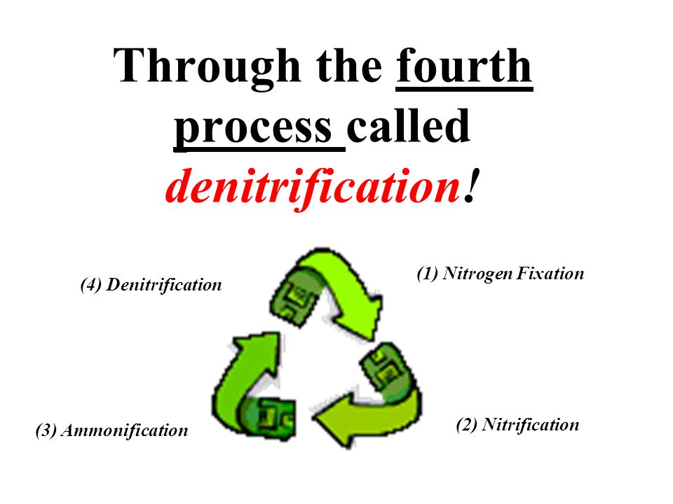 Through the fourth process called denitrification!