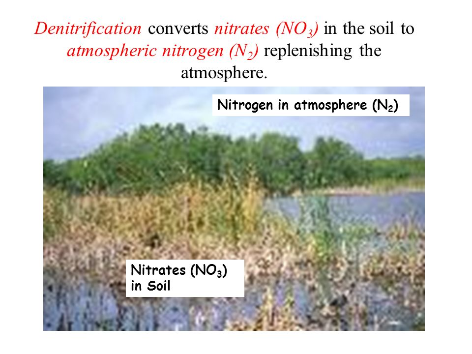 Denitrification converts nitrates (NO3) in the soil to atmospheric nitrogen (N2) replenishing the atmosphere.