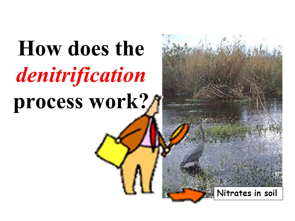 How does the denitrification process work