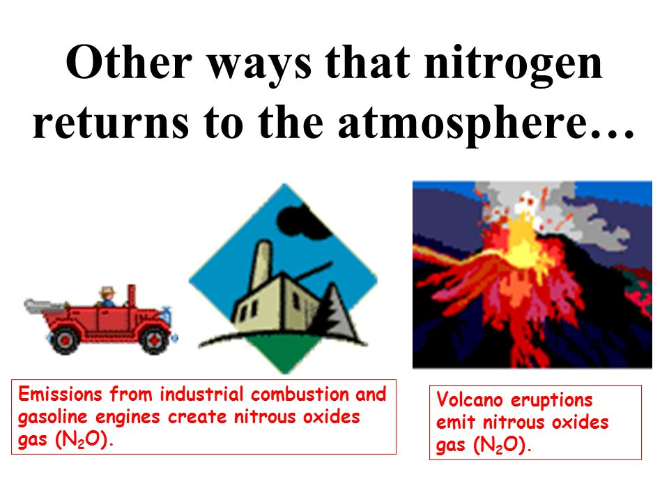 Other ways that nitrogen returns to the atmosphere…