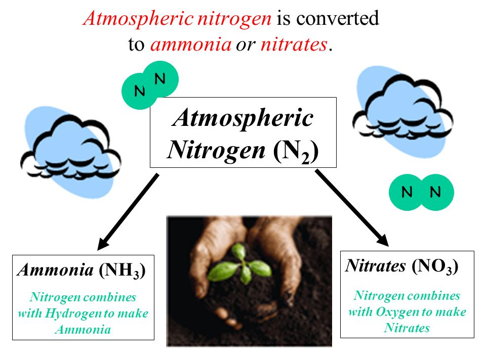 Atmospheric nitrogen is converted to ammonia or nitrates.