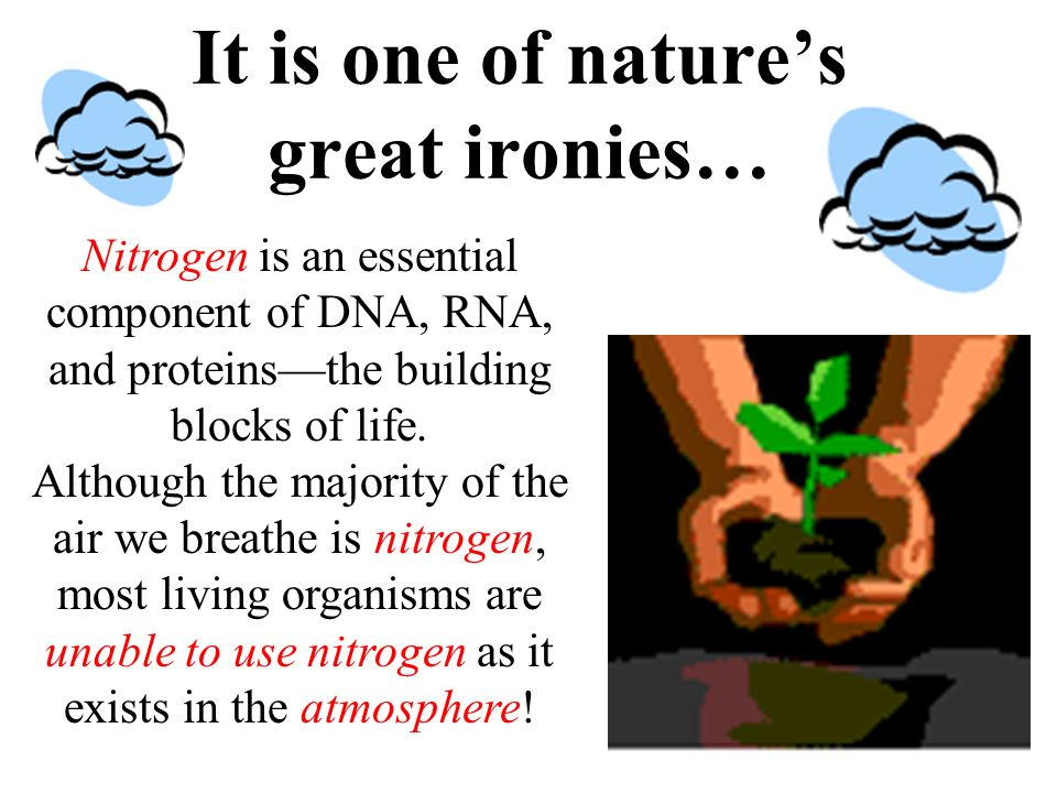 It is one of nature's great ironies…