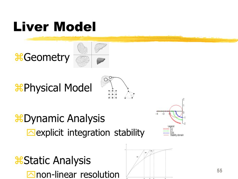 Liver Model Geometry Physical Model Dynamic Analysis Static Analysis