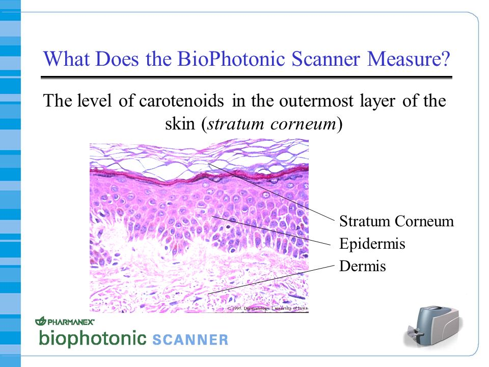What Does the BioPhotonic Scanner Measure