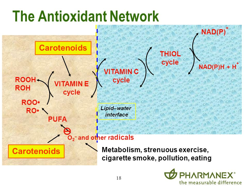 The Antioxidant Network