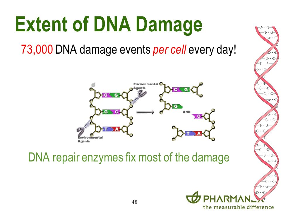 Extent of DNA Damage 73,000 DNA damage events per cell every day!