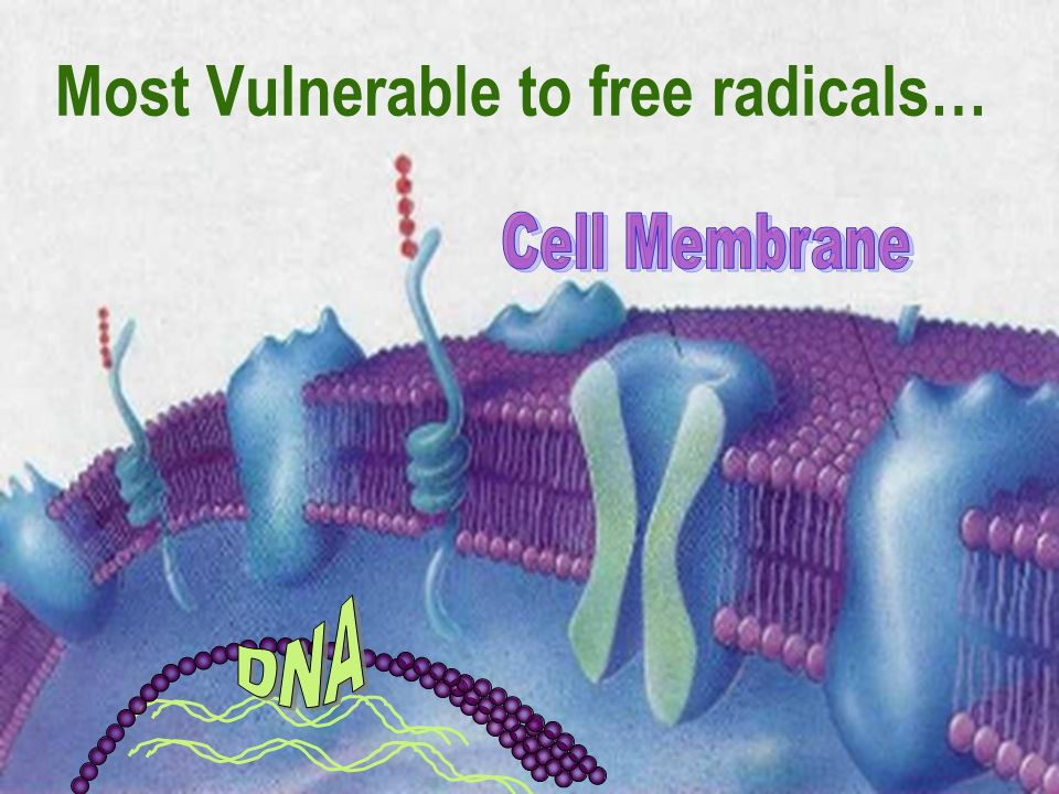 Most Vulnerable to free radicals…