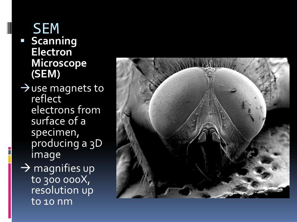 SEM Scanning Electron Microscope (SEM)