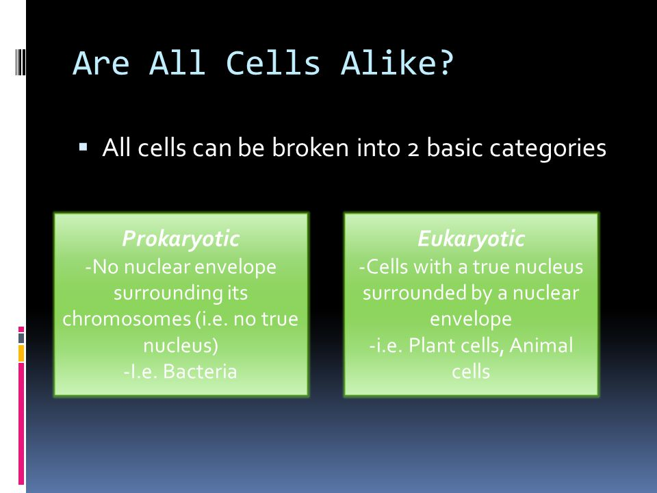 Are All Cells Alike All cells can be broken into 2 basic categories