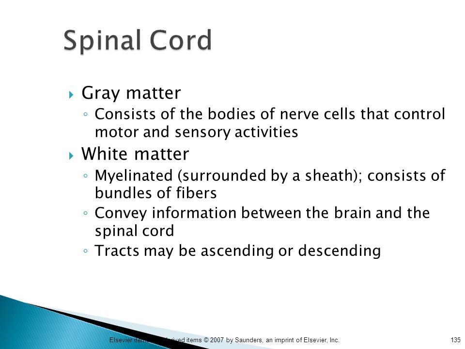Spinal Cord Gray matter White matter