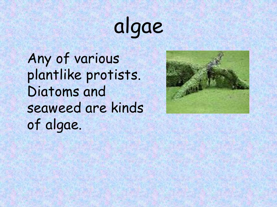 algae Any of various plantlike protists. Diatoms and seaweed are kinds of algae.