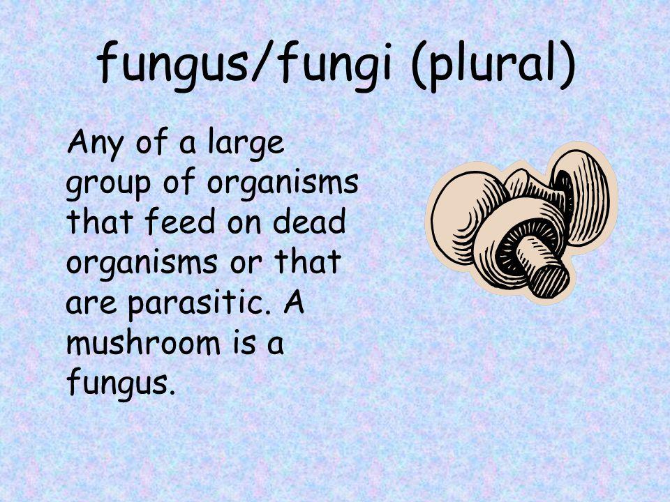 fungus/fungi (plural)