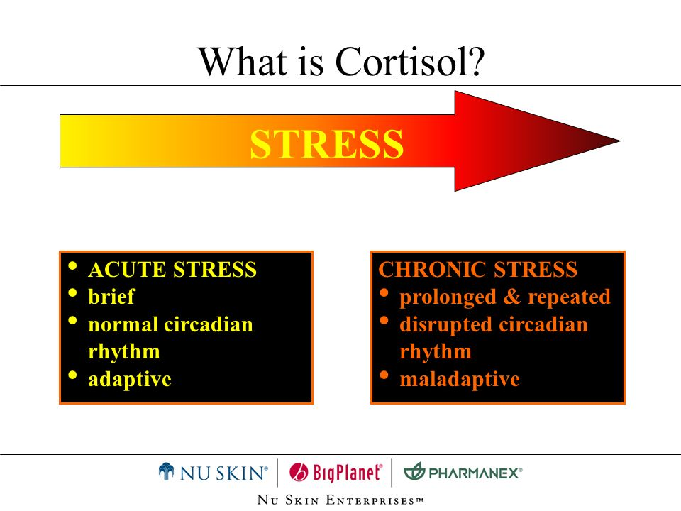 What is Cortisol STRESS ACUTE STRESS brief normal circadian rhythm