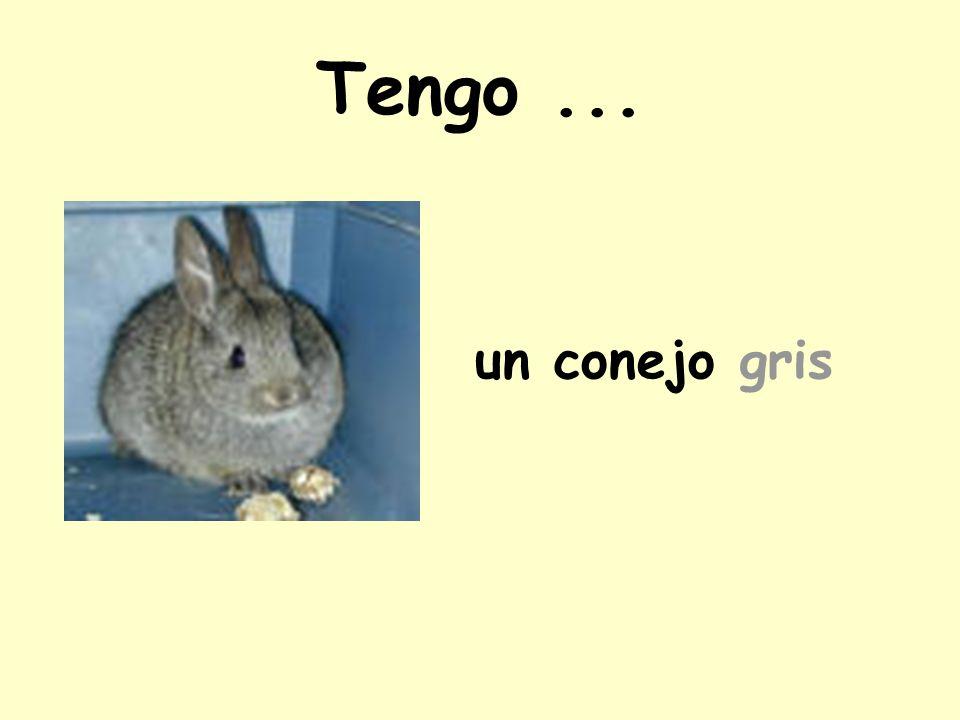 Tengo ... un conejo gris
