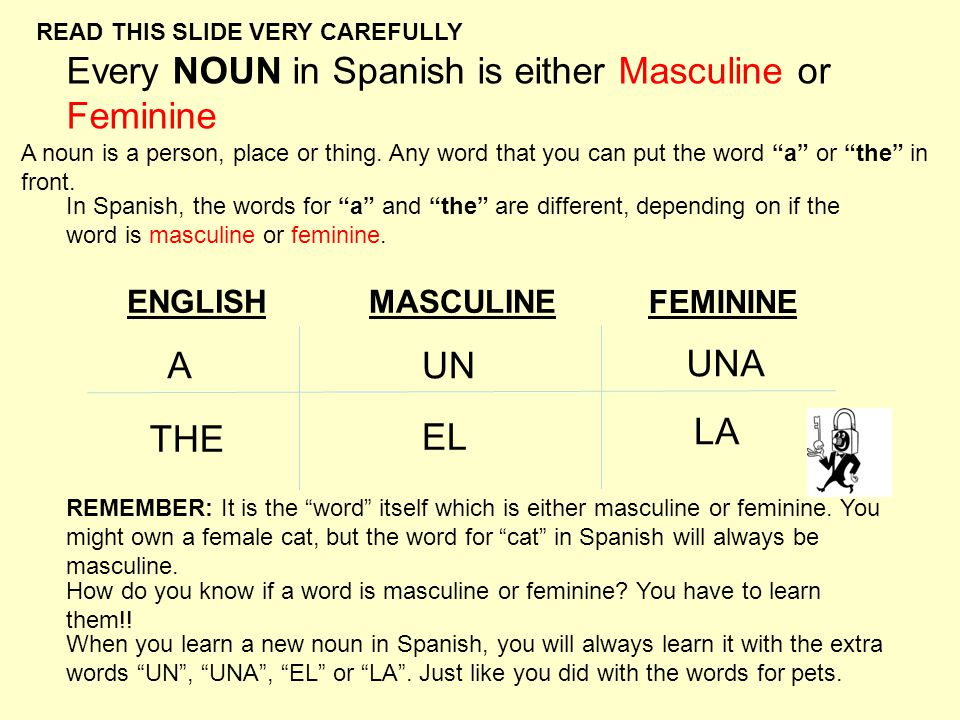 Every NOUN in Spanish is either Masculine or Feminine