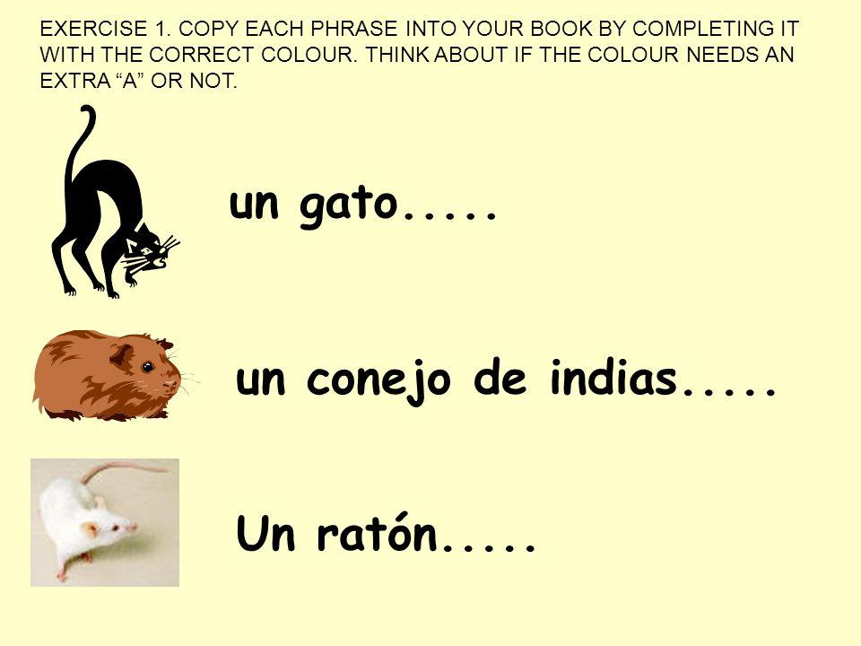 un gato..... un conejo de indias..... Un ratón.....