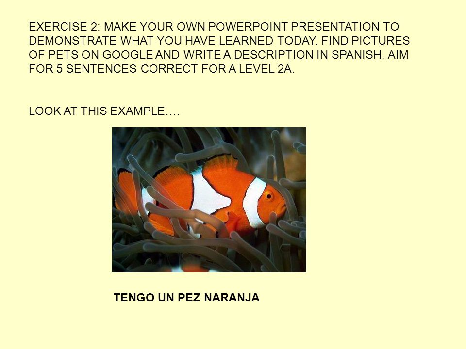 EXERCISE 2: MAKE YOUR OWN POWERPOINT PRESENTATION TO DEMONSTRATE WHAT YOU HAVE LEARNED TODAY. FIND PICTURES OF PETS ON GOOGLE AND WRITE A DESCRIPTION IN SPANISH. AIM FOR 5 SENTENCES CORRECT FOR A LEVEL 2A.
