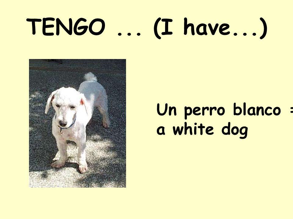 TENGO ... (I have...) Un perro blanco = a white dog