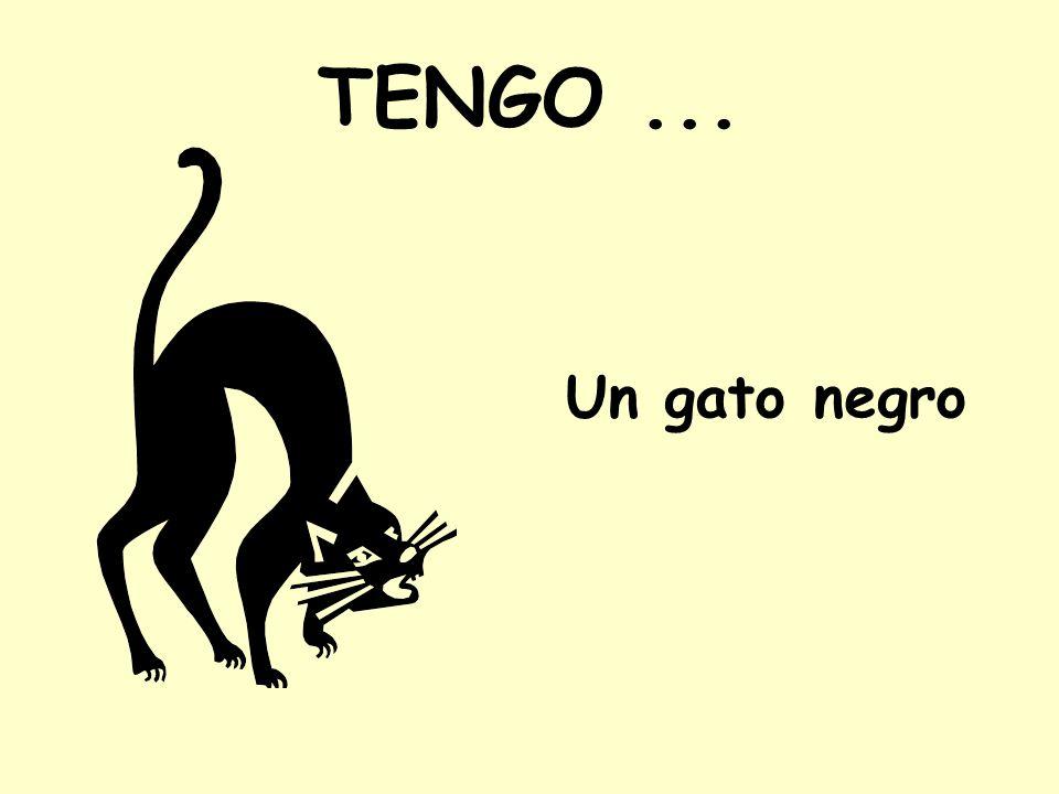 TENGO ... Un gato negro