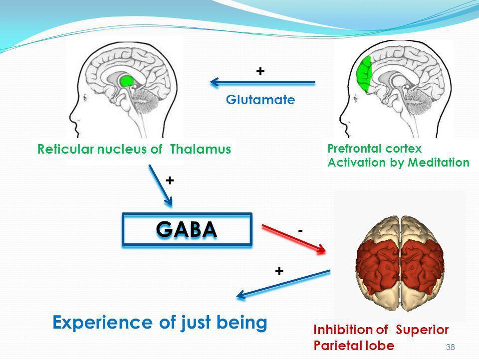 GABA Experience of just being + + - + Glutamate