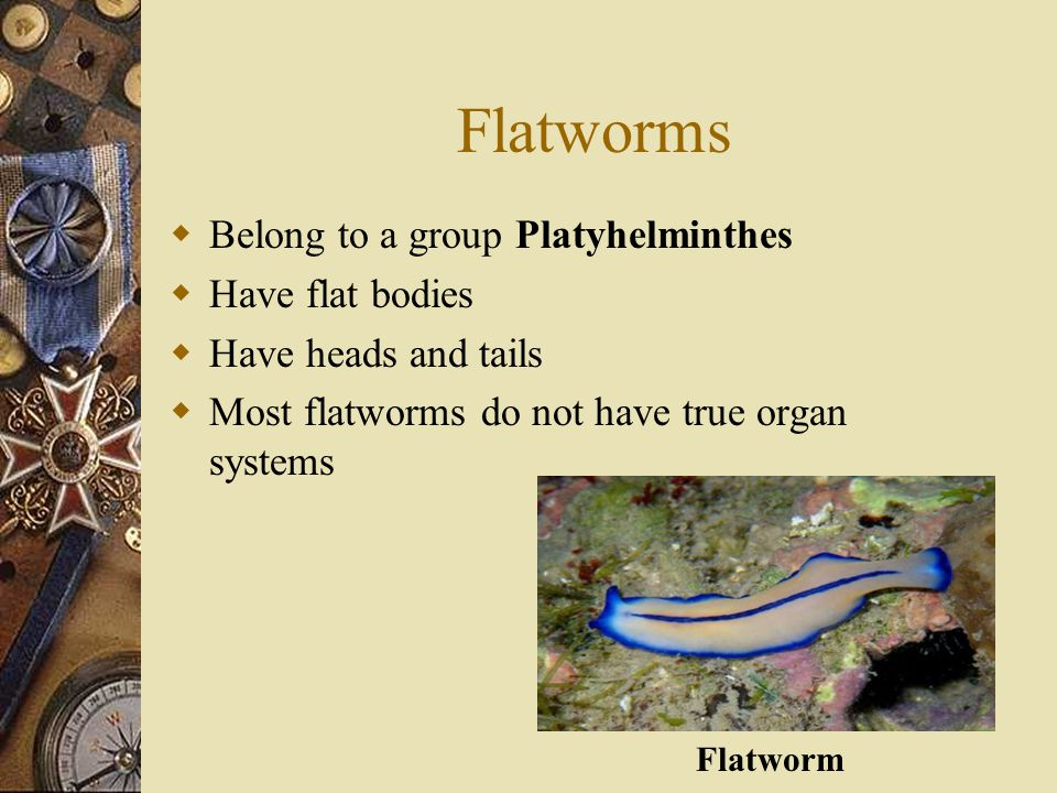 Flatworms Belong to a group Platyhelminthes Have flat bodies