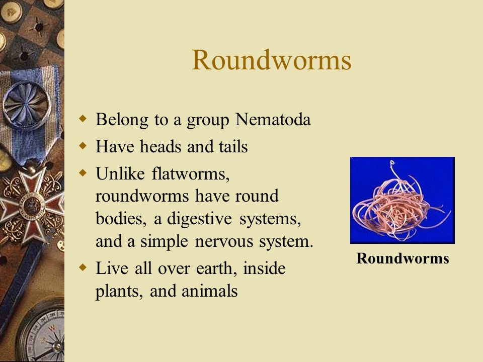 Roundworms Belong to a group Nematoda Have heads and tails
