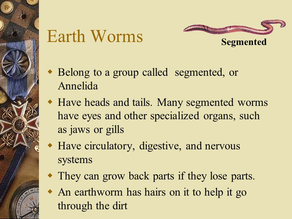 Earth Worms Belong to a group called segmented, or Annelida
