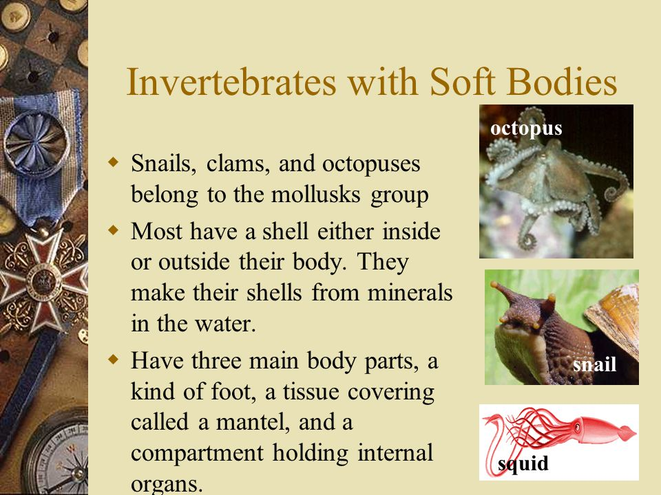 Invertebrates with Soft Bodies