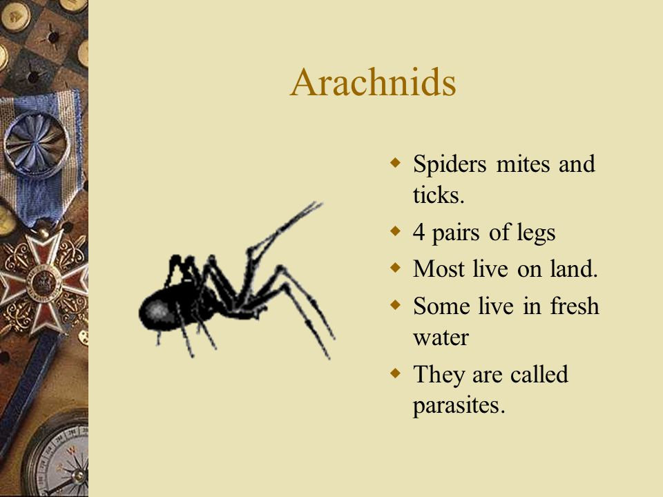 Arachnids Spiders mites and ticks. 4 pairs of legs Most live on land.