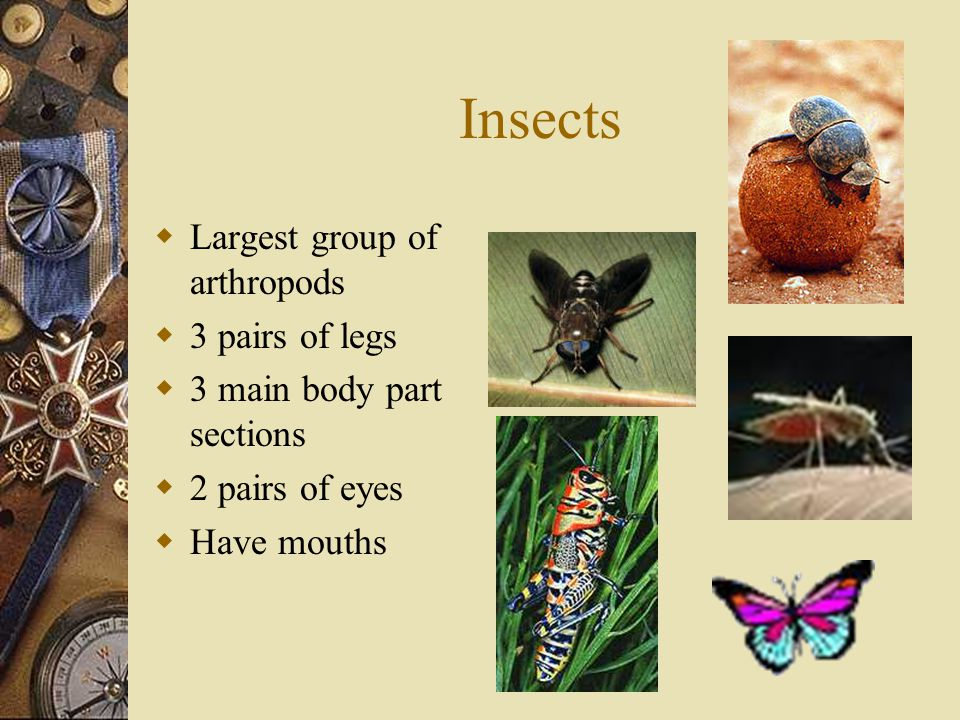 Insects Largest group of arthropods 3 pairs of legs