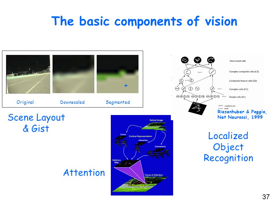 The basic components of vision