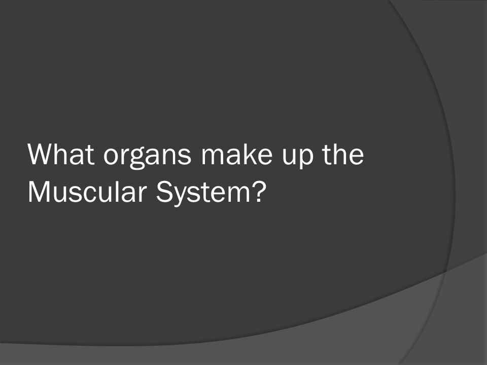 What organs make up the Muscular System