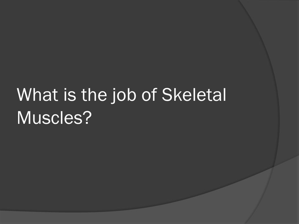 What is the job of Skeletal Muscles