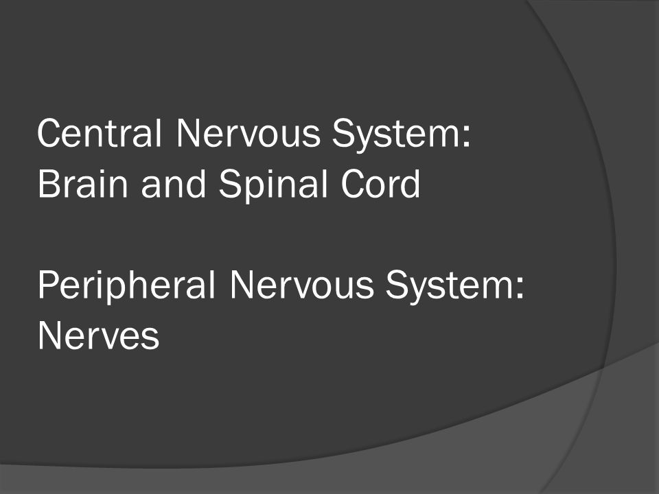 Central Nervous System: Brain and Spinal Cord Peripheral Nervous System: Nerves