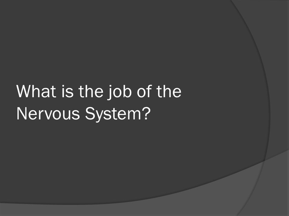 What is the job of the Nervous System