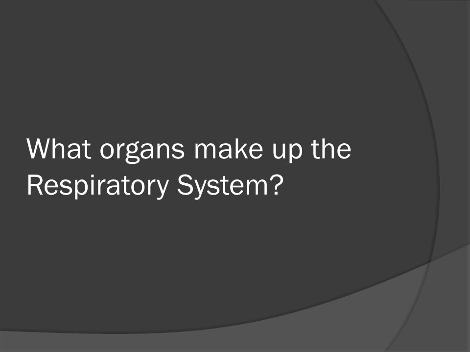 What organs make up the Respiratory System