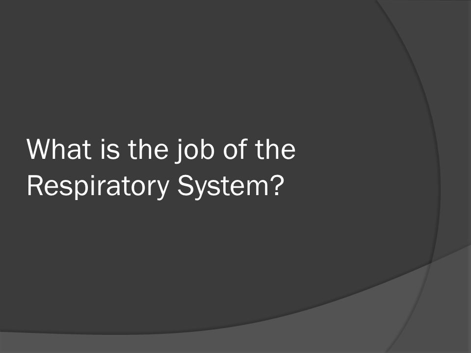 What is the job of the Respiratory System