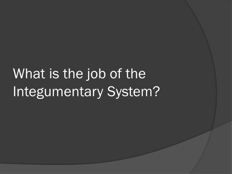 What is the job of the Integumentary System