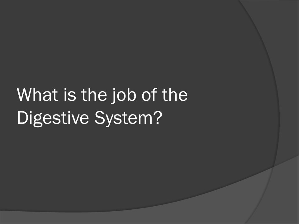 What is the job of the Digestive System