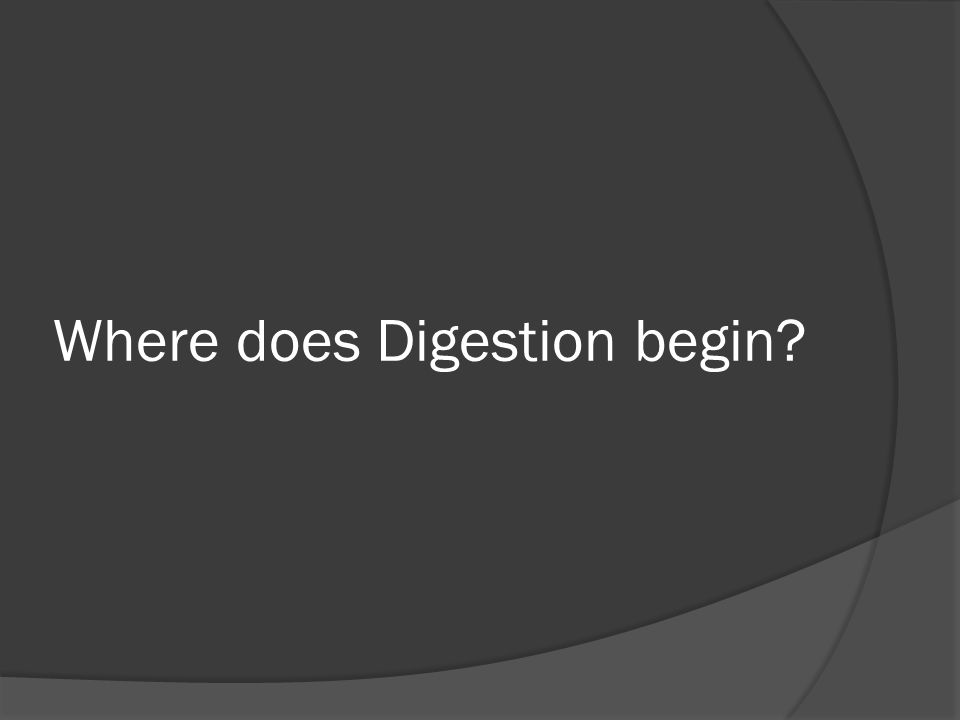 Where does Digestion begin