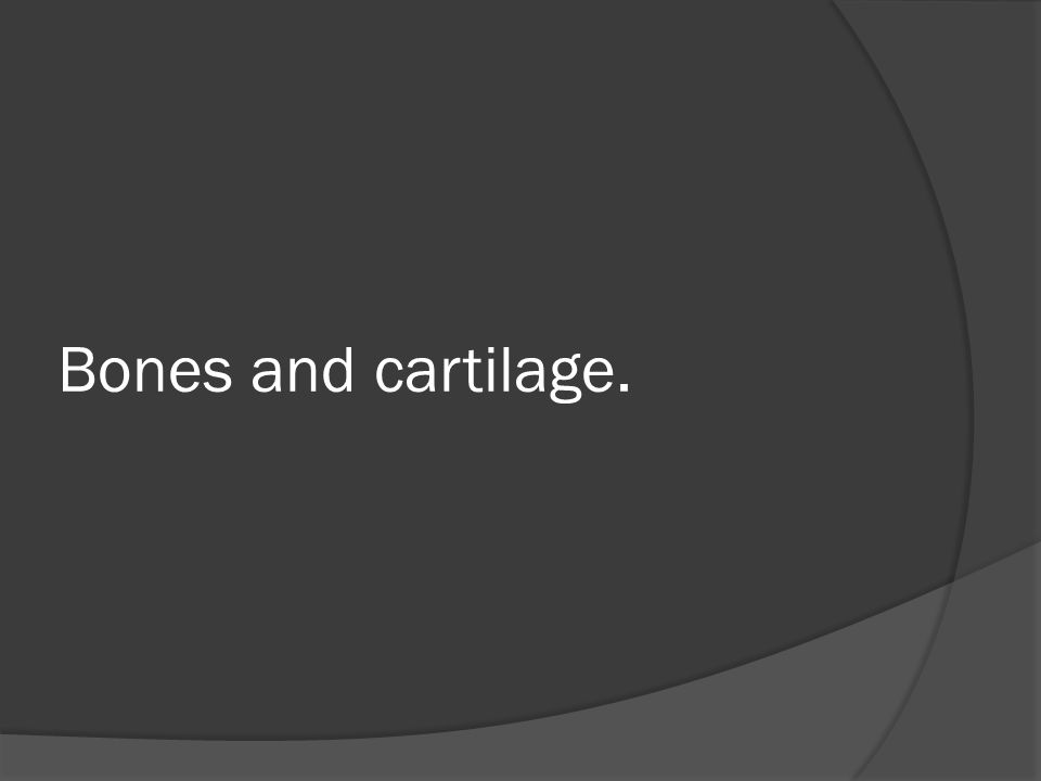 Bones and cartilage.