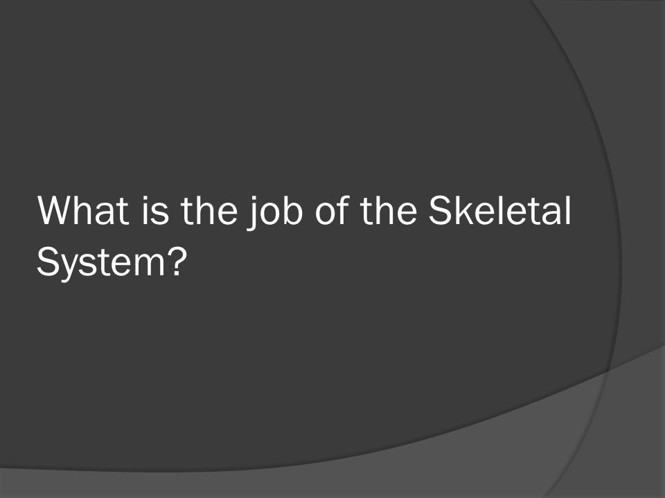 What is the job of the Skeletal System