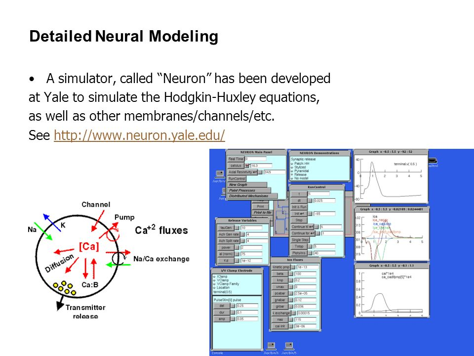 Detailed Neural Modeling