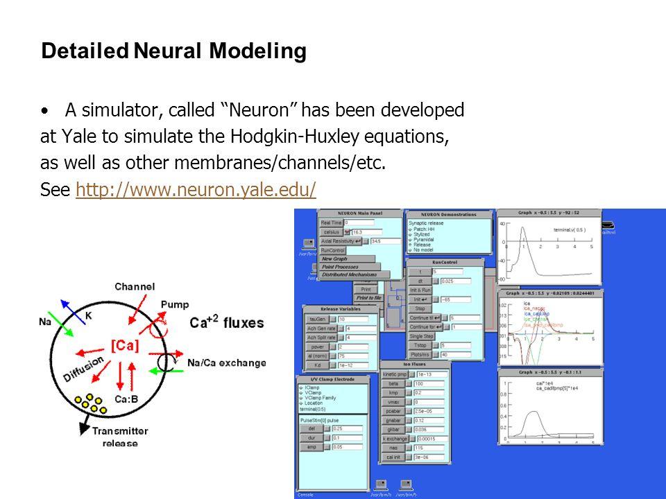 Detailed Neural Modeling